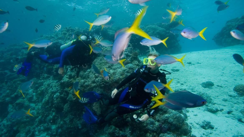 Discover Scuba Diving – Odkryj nurkowanie