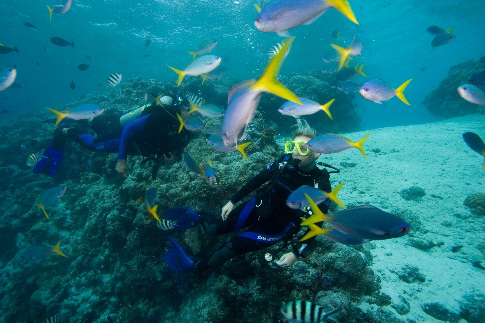 lawica ryb pod woda